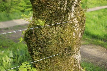 철조망 나무 껍질 입력 철