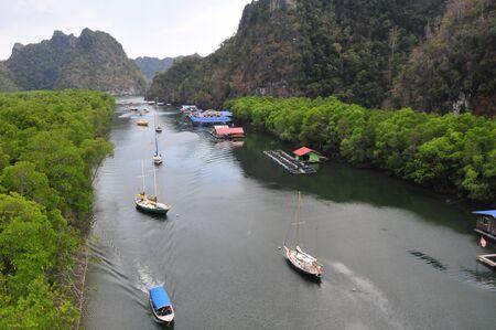 mangrove: The Kilim river