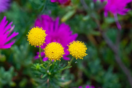 flower in the exotic garden of Roscoff, in Brittany Stock fotó