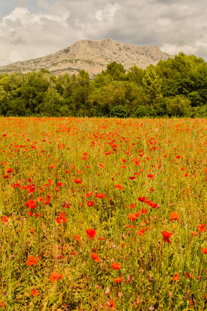 poppies with Sainte Victoire mountain in the background Stock Photo