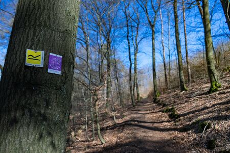Hiking signs and with a forest way on a summer day in northern Hesse, Germany