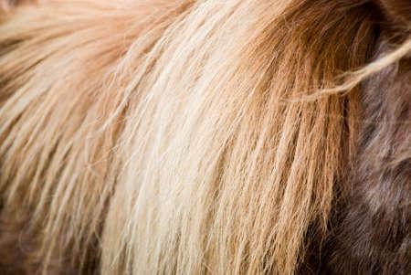 bedraggled: close up of ponys brown long mane