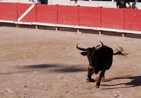 arles: Bull in the Roman arena of Arles, France Stock Photo