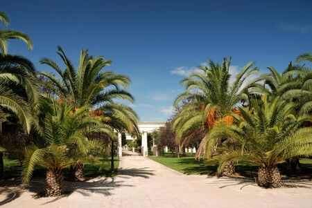 citypark: Citypark with palmtrees in the old channel of Turia river in Valencia, Spain