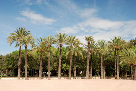 citypark: Citypark in the old channel of Turia river in Valencia.