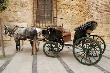 steed: Horses and carriage for sightseeing in Cordova, Spain