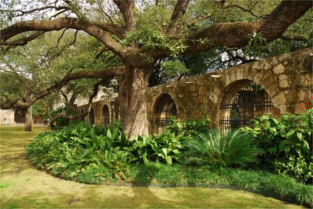 In the garden of Alamo, San Antonio, Texas photo