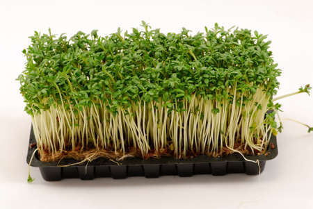 Green cress over white background photo