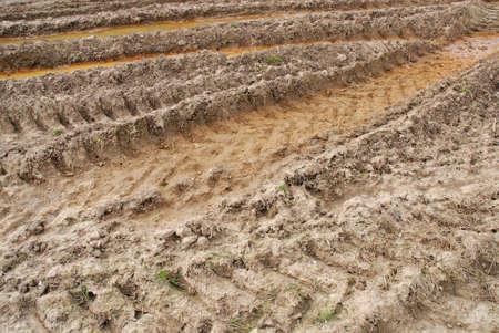 tyre tread pattern in mud Stock Photo - 2796929