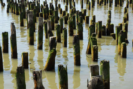 piling: Old piling stumps off the shore in New York Harbor
