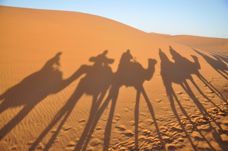 sahara desert: Shadows of camels in Sahara desert Merzouga, Morocco Stock Photo