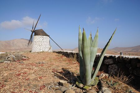 traditional windmill: Aloe Vera and traditional Windmill on Canary Island Fuerteventura, Spain