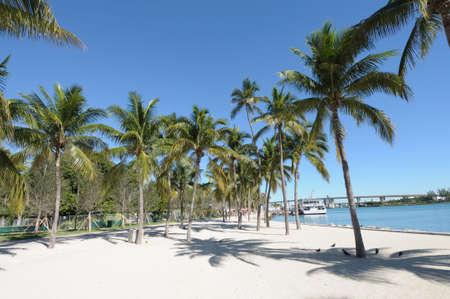 Palm Trees in Downtown Miami, Florida USA photo