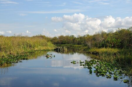 everglades: Landscape in the Everglades National Park, Florida USA