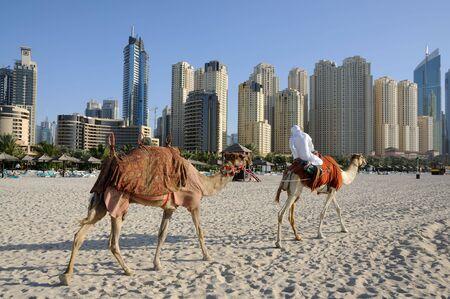 Camellos en la playa en Dubai, Emiratos Árabes Unidos