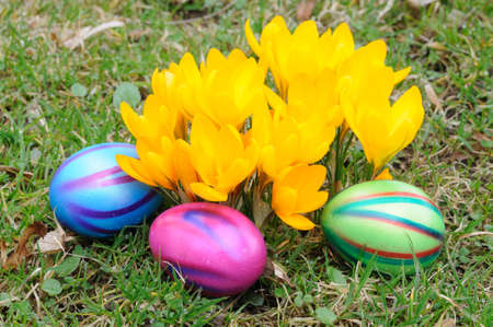 Easter eggs under yellow crocus flowers photo