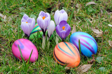 Colorful easter eggs under crocus flowers photo