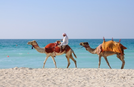 Beduinos con camellos en la playa en Dubai. Foto tomada en el 29 de enero de 2009 Editorial