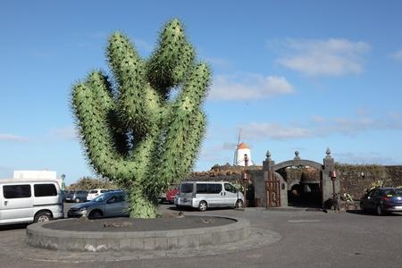 Riesen-Weiß Kaktusblüte Auf Lanzarote Lizenzfreie Fotos, Bilder Und ...