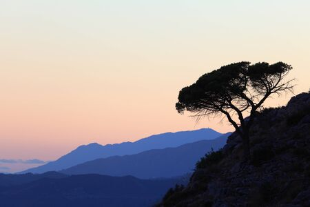 lonliness: Silhouette of a pine tree on the mountain. Andalusia, Spain