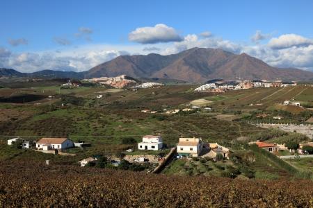 'costa del sol': Landscape with vineyard in Manilva, Costa del Sol, Andalusia Spain