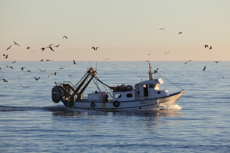 trawler: Fishing boat returning to home harbor with lots of seagulls