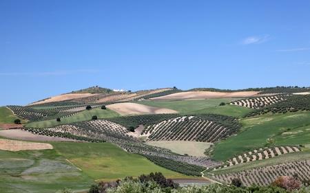 ronda: Landscape near Ronda, Andalusia Spain Stock Photo