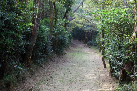 lantau: Sentiero nella foresta di Lantau Island, Hong Kong