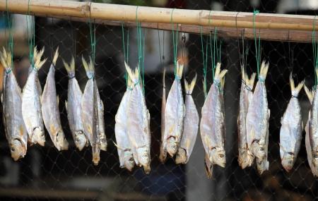 fish animal: Dried cod in Tai O fishing village. Lantau Island, Hong Kong, China Stock Photo