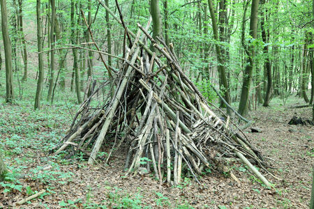 tipi: Tepee in the forest