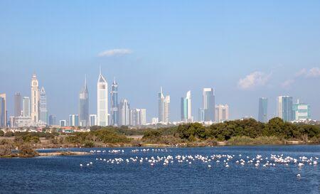 emirates: Dubai skyline with falmingos in foreground, United Arab Emirates