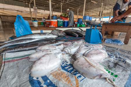 muttrah: MUTTRAH, OMAN - NOV 24: Fresh squid for sale at the fish market in the old town of Muttrah. November 24, 2015 in Muttrah, Muscat, Oman