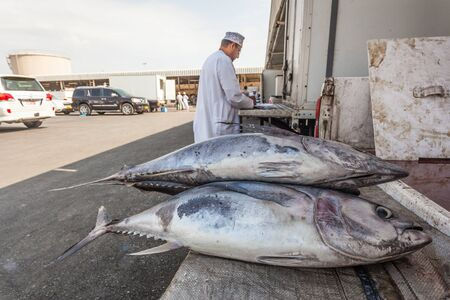 muttrah: MUTTRAH, OMAN - NOV 24: Fresh tuna for sale at the fish market in the old town of Muttrah. November 24, 2015 in Muttrah, Muscat, Oman