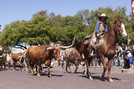 worth: FORT WORTH, TX, USA - APR 6: Cowboys and longhorns in the Fort Worth Stockyards historic district. April 6, 2016 in Fort Worth, Texas, USA
