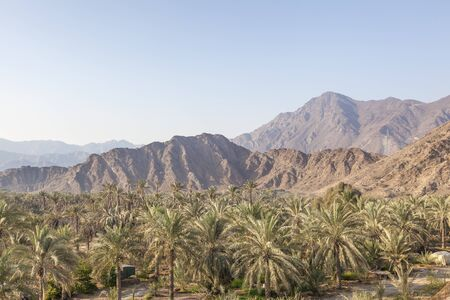 united arab emirate: Mountains and palm trees in the Fujairah Emirate, United Arab Emirates