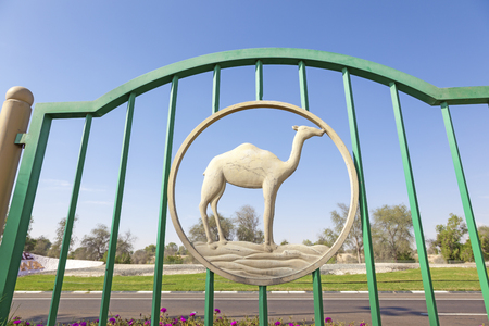 united arab emirate: Camel figure in a fence in the desert town Mezairaa. Emirate of Abu Dhabi, United Arab Emirates, Middle East