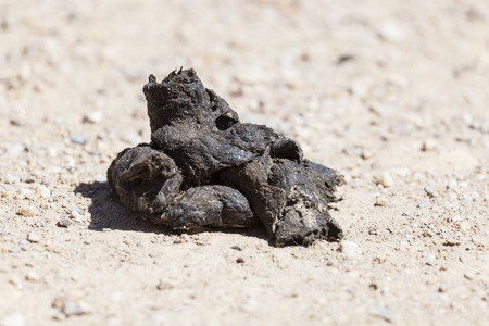 Closeup of a pile of dog poop on the road Stock Photo