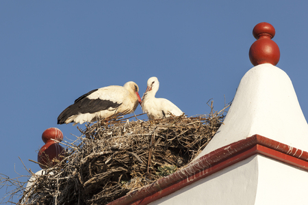 Nest with storks on top of an abandoned factory chimney in Huelva, Andalusia, Spain Stock Photo
