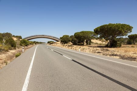 Road with a wildlife overpass in the Donana national park. Andalusia, Spain Stock Photo
