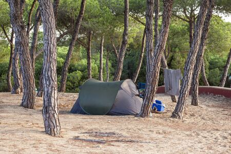Small tent on a campground under pine trees
