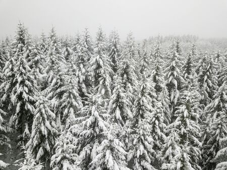 Snow covered trees in a white winter forest Banco de Imagens - 92094366