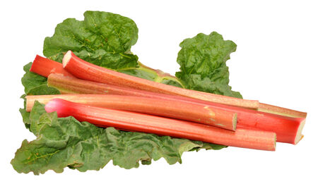 Freshly picked rhubarb stalks and leaves, isolated on a white background  Stock Photo - 27156553