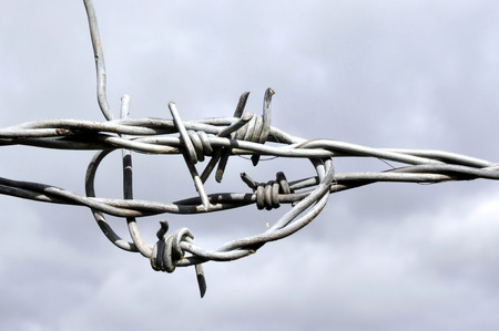 galvanised: Galvanised barbed wire knot with a grey sky