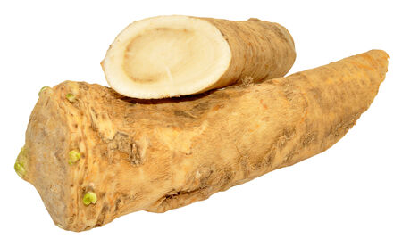 horseradish sauce: Horseradish root used to make hot horseradish sauce and flavour food, isolated on a white background. Stock Photo