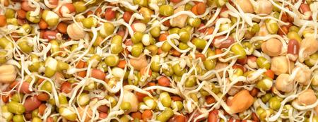 有機豆とレンズ豆の背景の混合健康発芽 写真素材 - 43407678