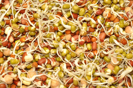 mung bean sprout: Healthy sprouting mixed of organic beans and lentil background Stock Photo