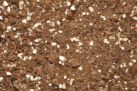 raices de plantas: fondo Textura del suelo seco con pequeñas piedras y raíces de las plantas viejas Foto de archivo