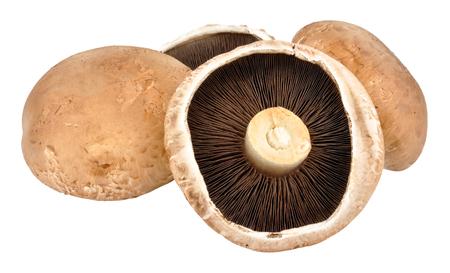 gilled: Large raw Portobello mushrooms isolated on a white background Stock Photo