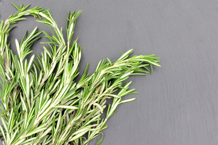 bunched: Bunch of fresh rosemary herb on a grey slate background