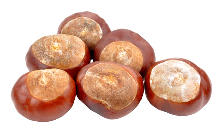conkers: Horse chestnut tree conkers isolated on a white background